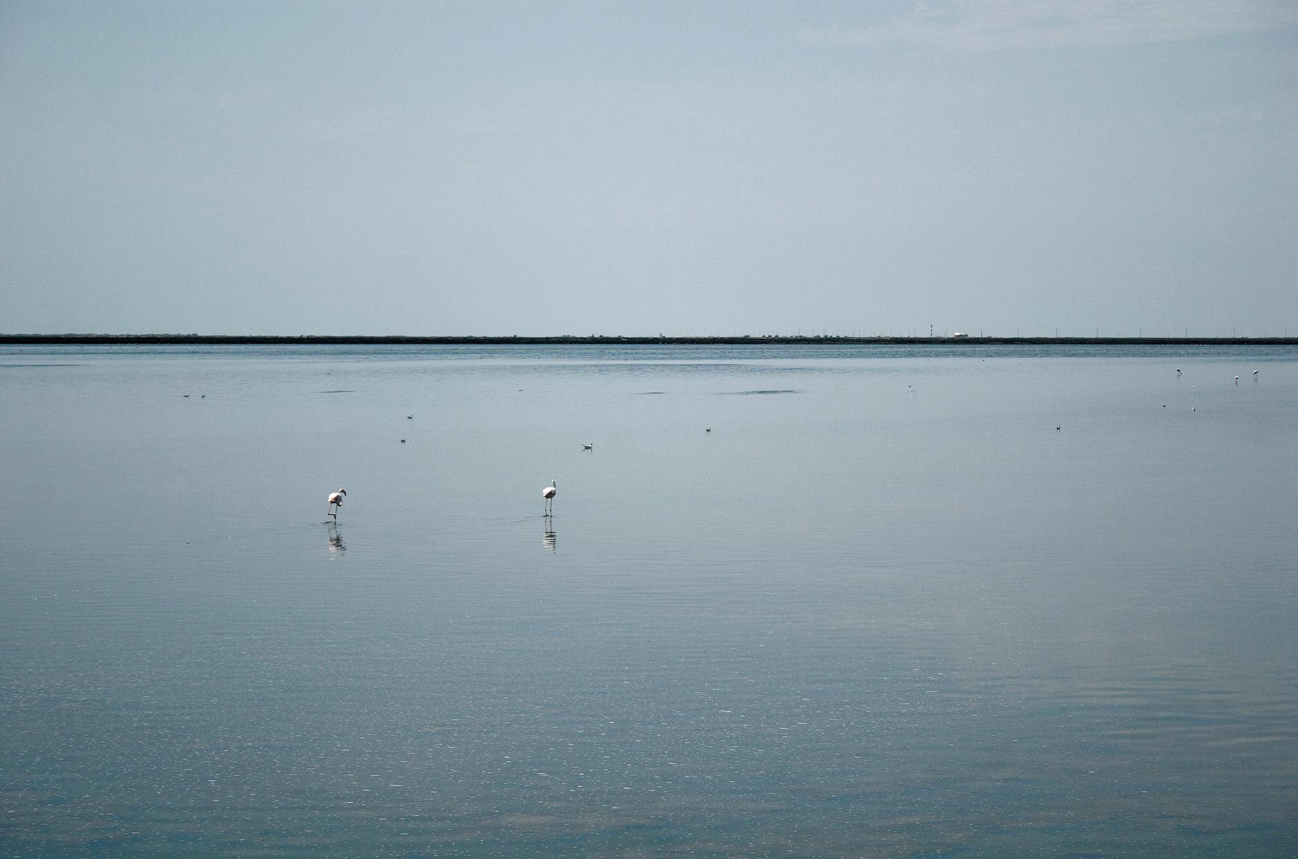 Michelle Grant | Stillness | Flamingo