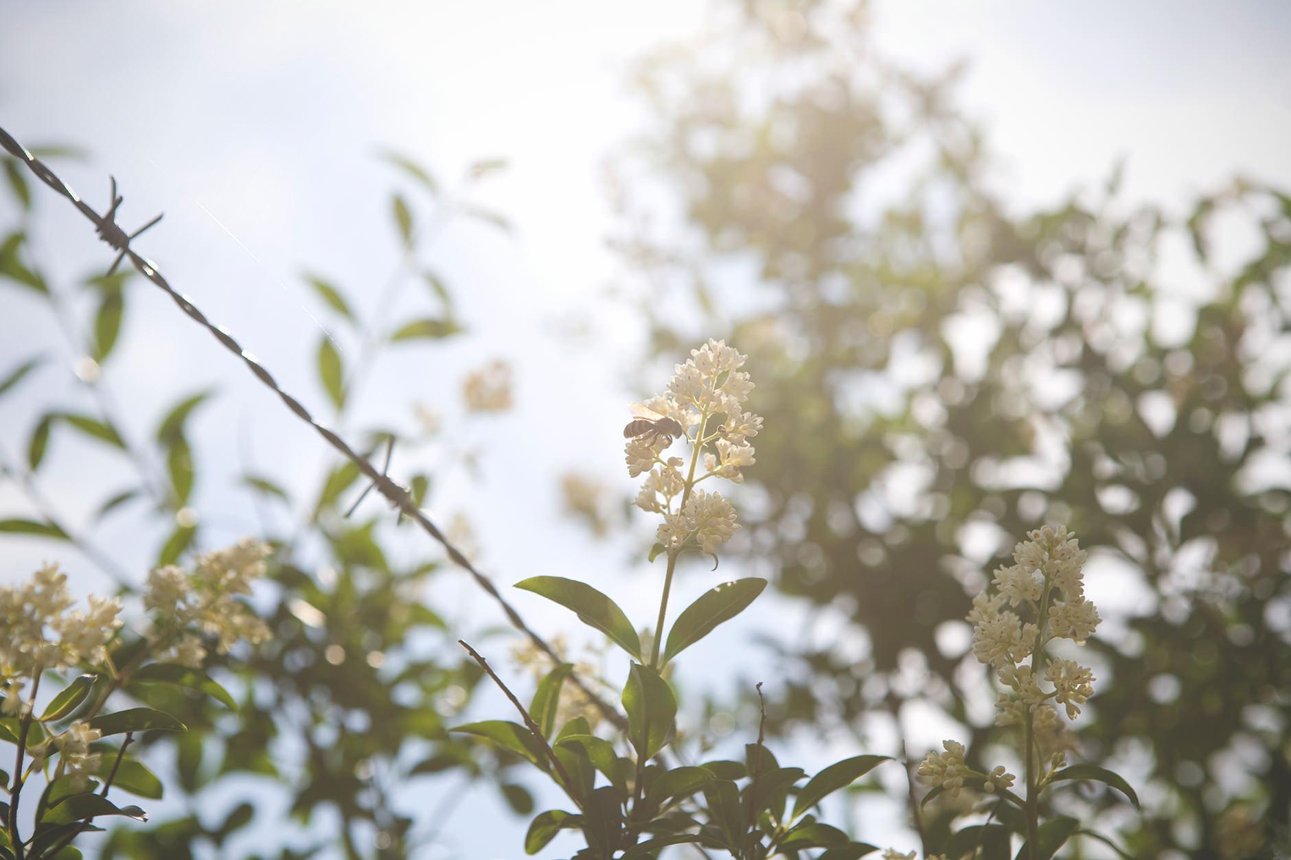 Michelle Grant | Stillness | Bee