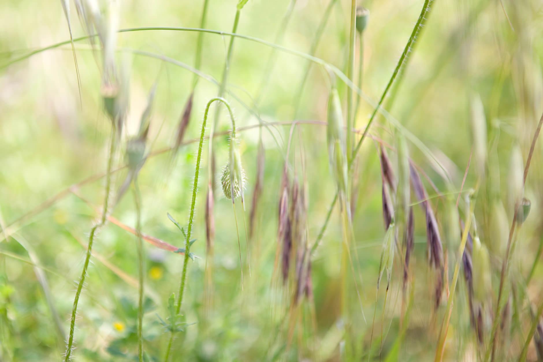 Michelle Grant | Stillness | Untitled