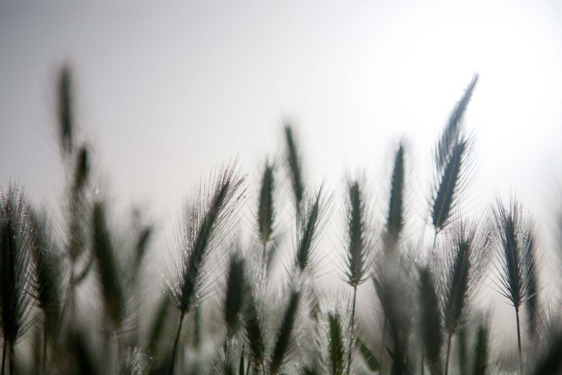 Michelle Grant | Stillness