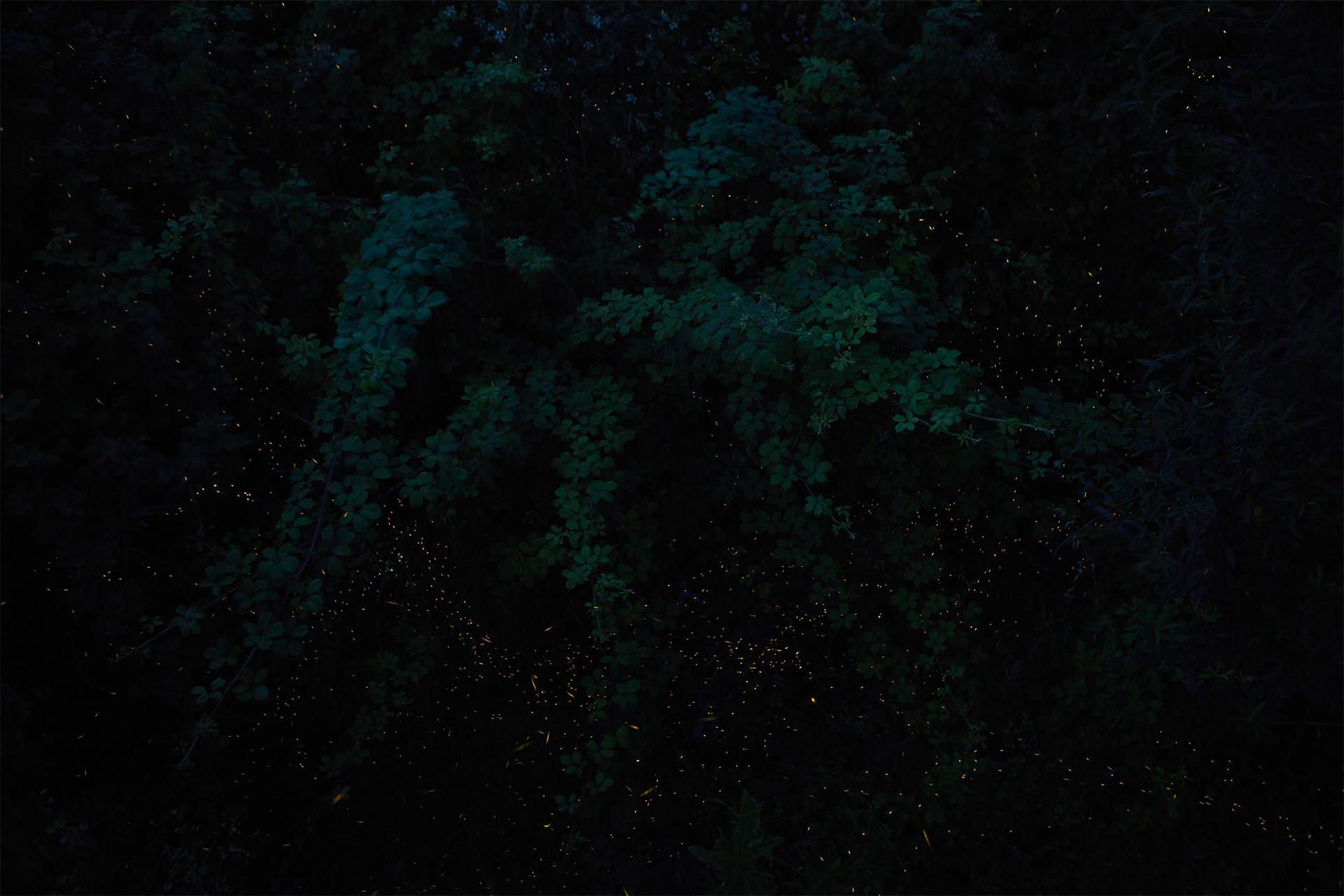 nightlights ii Michelle Grant